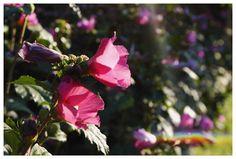 @beautyofourworld07 Flowers, Plants, Photography, Photograph, Fotografie, Photoshoot, Plant, Royal Icing Flowers, Flower