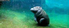 I <3 hippos.