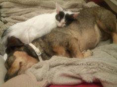 Adopta a CHASE EN ADOPCION Nac. 31/3/16 Negativo FELV/FIV ( Gato Comun ) - #adopta #gatos