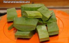 Tumore e Aloe: Studi clinici dimostrano efficacia Aloe Arborescens contro il cancro