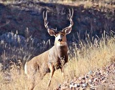10 Reasons to Fly Fish Rather than Deer Hunt
