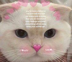 Funny love memes cute new ideas Cute Cat Memes, Cute Love Memes, Funny Love, Love Memes For Him, Diy Funny, Memes Humor, Bts Memes, Funny Memes, Humor Videos