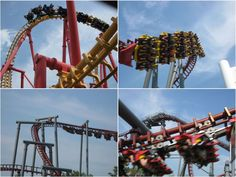 Top 7 Parks In Cincinnati Roller Coaster Ride, Roller Coasters, Cincinnati Museum, Kings Island, Amusement Parks, Vintage Postcards, Vintage Travel Postcards, Roller Coaster