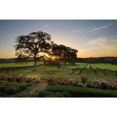 Naggiar Vineyards, Grass Valley, California