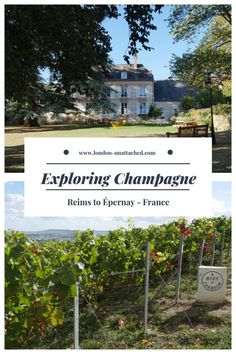 Champagne Region wine tourism learning about Champagne, France : Exploring Champagne, France Wine Tourism in Champagne France Champagne France, Wine Tourism, Reims, Visit France, France Travel, European Travel, Wine Tasting, Travel Destinations, Travel Tips