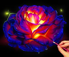 Colored pencil glowing rose on black paper! 🌹✨💖 The best way to get colors so bright on black paper is with prismacolor matte spray… Prismacolor, Colorful Drawings, Art Drawings, Horse Drawings, Drawing Sketches, Glowing Flowers, Black Paper Drawing, Colored Pencil Techniques, Plant Drawing