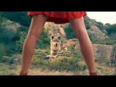 ▶ Chaperon Sud de France - YouTube Conte, France, Arts, Google, Red Riding Hood, The Chaperone, French