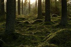 Forrest, green gold.