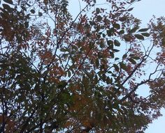 Red leaves in Kobe,feeling winter's come♪