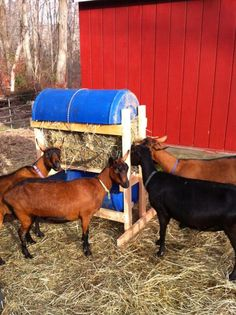 #goatvet likes hay feeders that don't allow fecal contamination