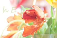 Breath Parrot Tulip Photograph High Style Decor by ElayneInspired, $35.00