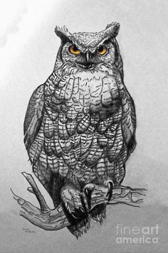 Great Horned Owl Black And White by Sandi OReilly Owl Photos, Owl Pictures, Bird Drawings, Animal Drawings, Bugs Bunny Drawing, Owl Artwork, Scratchboard Art, Evil Art, Great Horned Owl