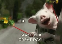 Discover & share this Pig GIF with everyone you know. GIPHY is how you search, share, discover, and create GIFs. Funny Happy Birthday Wishes, Birthday Messages, Birthday Funnies, Birthday Stuff, Friend Birthday, Birthday Quotes, Birthday Greetings, Funny Birthday, 50th Birthday