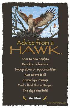 ☆ Advice From a Hawk ~:By Ilan Shamir ☆