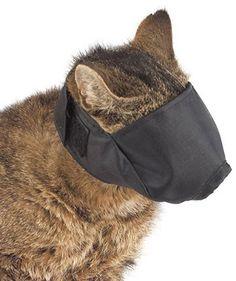 cat-hood