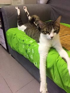Taking yoga to the next level http://ift.tt/29R0pQT via /r/cats http://ift.tt/29Bjp37 cats funny pictures