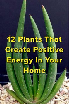 pflanzen züchten 12 Plants That Create Positive Energy In Your Home We are want to say thanks if you Container Gardening, Gardening Tips, Indoor Gardening, Urban Gardening, Plantas Indoor, Inside Plants, Plants For Home, Creating Positive Energy, Growing Plants
