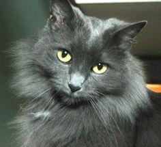 My cat Guyton