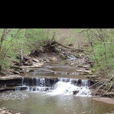 Picture taken at Cincinnati nature center.