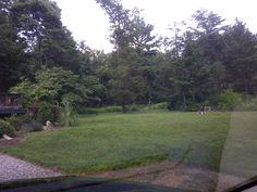 Rose Cottage front yard