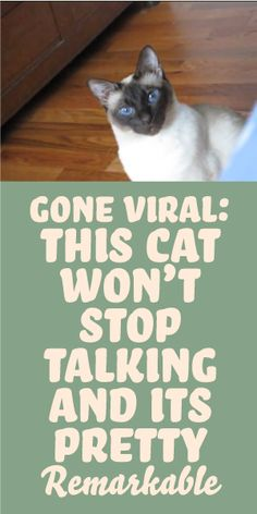 GONE VIRAL: This Cat Won't Stop Talking And Its Pretty Remarkable!
