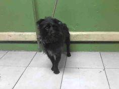 www.PetHarbor.com pet:LACO1.A4955282