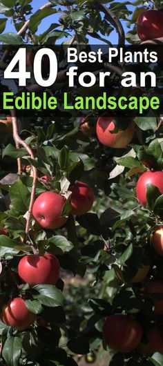 If you have an edible landscape on your property, then you can live off the land if you ever have to. Here are 40 great plants for edible landscaping.