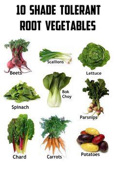 10 Shade tolerant root vegetables #vegetable_gardening