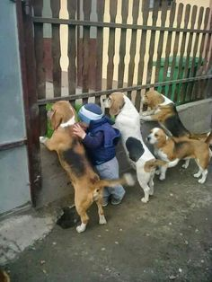 Are you interested in a Beagle? Well, the Beagle is one of the few popular dogs that will adapt much faster to any home. Family Friendly Dogs, Friendly Dog Breeds, Baby Animals, Funny Animals, Cute Animals, Nature Animals, Animal Memes, Art Nature, Animals And Pets