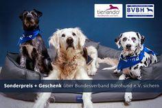 Bürohund-Tierlando Hundebett Office Ortho Plus Serie
