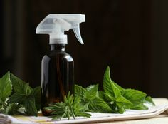 Leave the plugins and toxic sprays at the store and opt for these simple homemade air freshener recipes instead, harnessing the power of essential oils! Homemade Cleaning Products, Natural Cleaning Products, Natural Products, Essential Oil Uses, Doterra Essential Oils, Peppermint Spray, Homemade Air Freshener, Home Scents, Cleaners Homemade