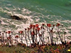 meninas olhando o mar....em família Canon Powershot, Wind Turbine, Photos Of Girls, Natural Landscaping, Fotografia