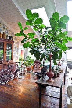 Consejos y cuidados para mantener tu Ficus Lyrata