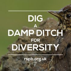 Our project of the week: dig a damp ditch for diversity! Perfect for giving hedgehogs and reptiles a lush byway to travel along! #homesfornature
