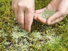There are two main ways to repair dead spots in your lawn, and they're both very easy to do. Here's how to perform them perfectly!