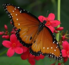 Great website with photos and basic reading describing the Butterfly lifecycle.  It also has links to activities.