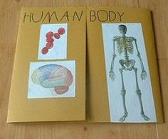 human body lapbook cover