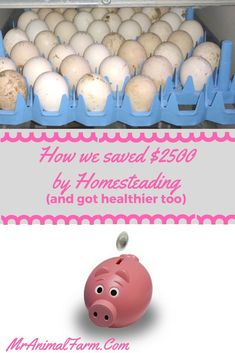 Want to know how to save money homesteading?  Find out how we save $2500 a year homesteading...and get healthier too!