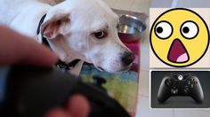 Dogs Take Xbox One Controller - Perros  -小狗 - कुत्ते की - الكلاب  -  cãe...