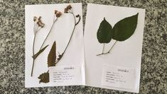 Experimentoteca - Prensa para flores e folhas (como fazer exsicatas para...
