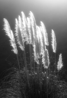 Blowing in the wind! by Takeshi Morioka
