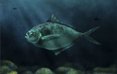 Thinking fish on Behance
