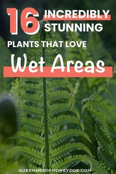 Bog Garden, Rain Garden, Lawn And Garden, Water Garden, Shade Garden, Garden Plants, Shade Plants, Cool Plants, Shade Perennials