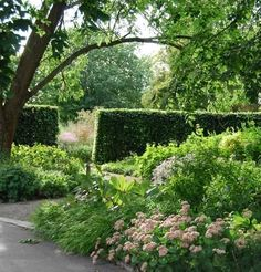 Piet Oudolf hedge and natural garden