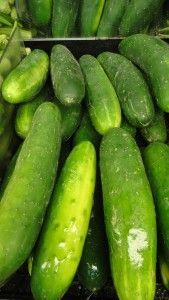 Grandmas Spicy Dill Pickle Recipe  4 Tbl pickling salt 1-2 Tbl sugar  1 lg bunch fresh dill  3-4 teaspoons whole black peppercorns 12 small cloves garlic, peeled and whole At least 1 hot pepper for each jar, jalapeno, habanero, thai peppers, cayenne, whatever.