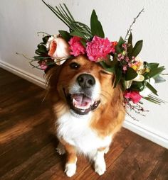 Puppy with a flower crown