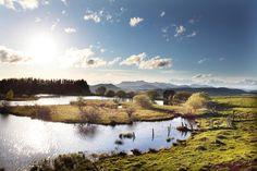 Auvergne sauvage : le lac des Bordes, dont la surface est constellée d'ilots tourbeux