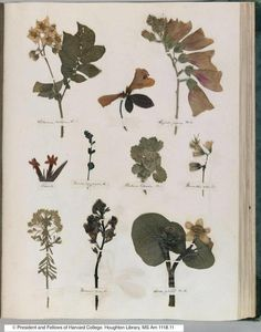 As an enthusiastic fourteen-year-old, Emily Dickinson made a book full of dried plants & flowers