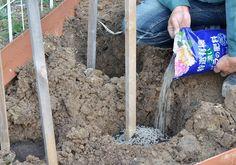 ガーデニング初心者さん必見! 初めての本格的な「バラの花壇」づくり[完全保存版] | GardenStory (ガーデンストーリー) Garden, Products, Garten, Lawn And Garden, Gardens, Gardening, Outdoor, Gadget, Yard