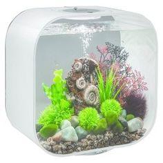 biOrb Life 30 with MCR Lights Aquarium - White Nano Aquarium, Aquarium Filter, Aquarium Design, Aquarium Ideas, Biorb Fish Tank, Fish Swimming, Betta Fish, Fresh Water
